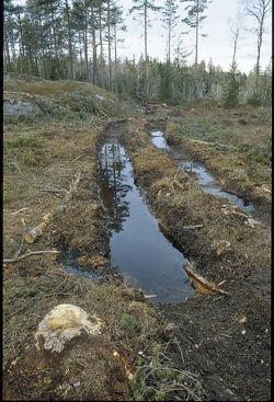 Hvis den foreslåtte markaforskriften blir vedtatt i sin nåværende form, vil all forvaltning foregå på skogbrukets banehalvdel. Foto: Sverre M. Fjelstad.