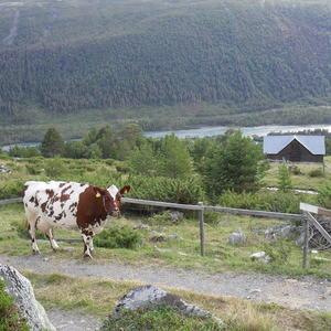 Illustrasjonsbilde fra Skjåk