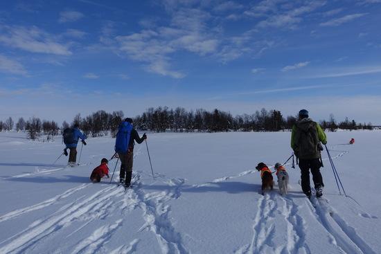 Referat vintertrening 2018 på Vaset Norsk Irsksetterklubb