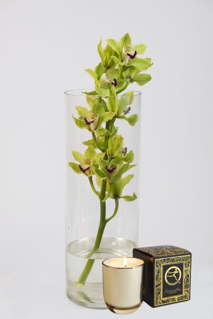 Cymbidium grønn i vase