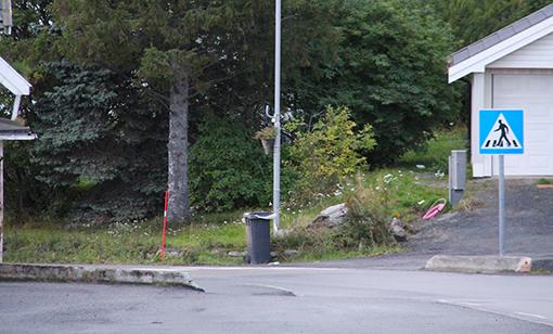 flagg_ved_veien_ingress3.jpg