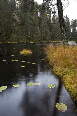 Oslo kommunes skoger skal være et fristed der mennesker «kan oppleve natur, ro og stillhet, og drive friluftsliv og idrett». De viktige ordene «ro og stillhet» ble foreslått av ØV. Foto: Espen Bratlie.