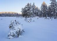 Bilde annonse villmarkstur - Skogsmåsan - Espen Bratlie_1000x653