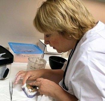 Tannhelsesekretær Svetlana Rud 2018_350x338