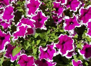 blomster[1]