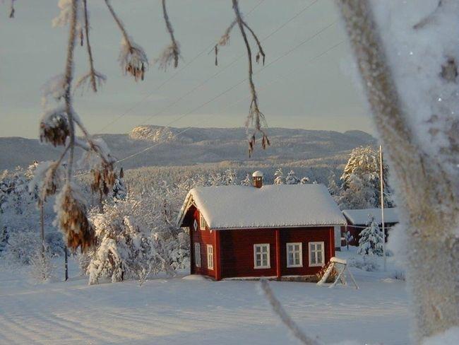 Holo vinter