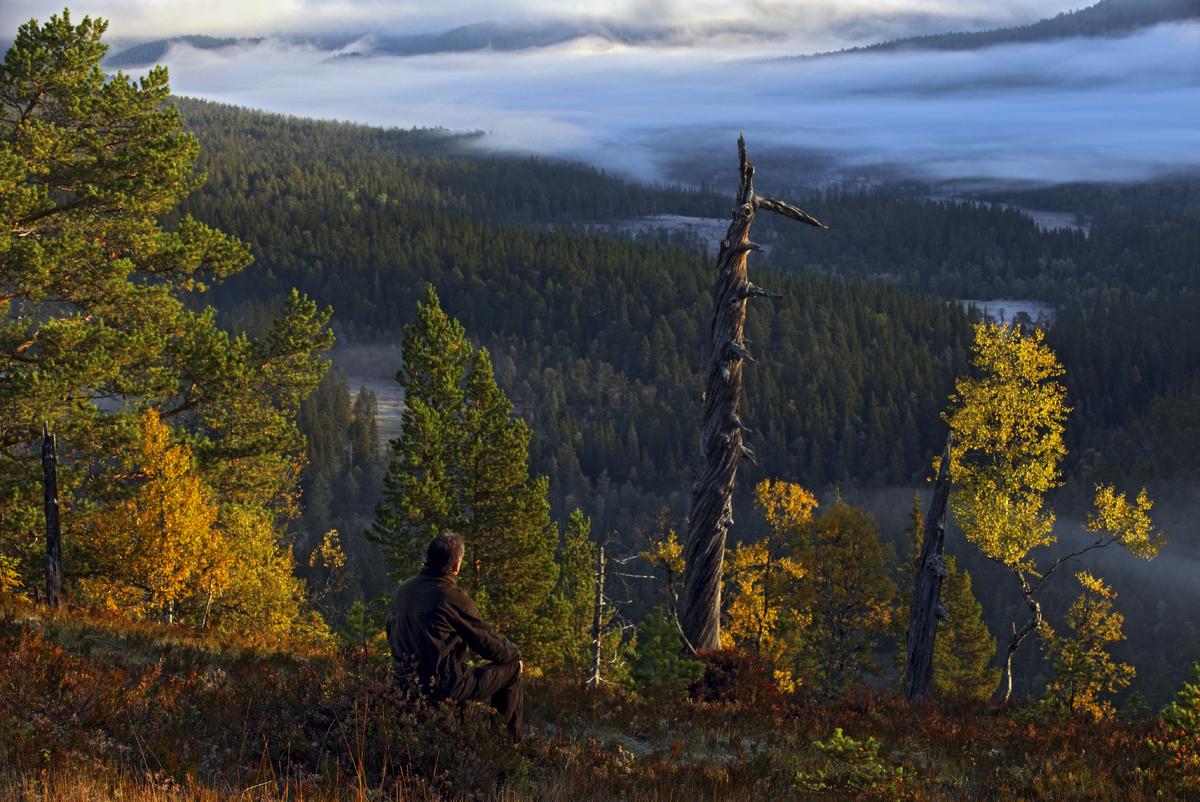 Høstmorgen, fra Skotthaugen, ned mot Grytdalen Foto Steve Halsetrønning_1200x802.jpg