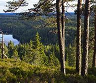 Østmarkas kvaliteter er ikke godt nok vernet gjennom markaloven, uansett hvor mange ganger nasjonalpark-motstanderne i Enebakk påstår det. Foto: Espen Bratlie.