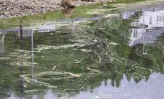 alge_eller_noe_annet_INGRESS