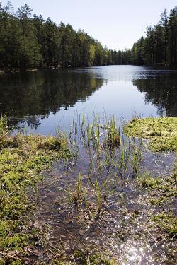 Solbergvann, like i nærheten av Lutvann, er et av de bruneste vannene som er undersøkt i Østmarka. Foto: Espen Bratlie.