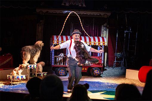 sirkuslivbig
