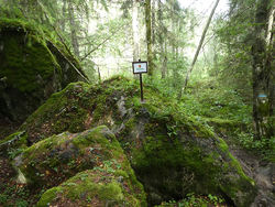 Eventyrskog øst for Godlia. Foto: Lise Henriksen.