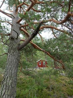 Ved Gjersrudleiken. Foto: Lise Henriksen.