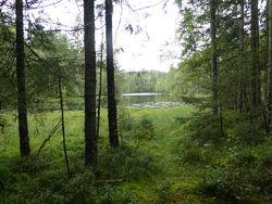 Svartkulp ved Dølerud. Foto: Lise Henriksen.