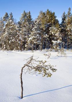 Skogsmåsan om vinteren – her går en av de fineste skiløypene i Østmarka. Foto: Espen Bratlie.