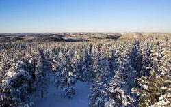 Kommende masjonalpark i Østmarka i vinterskrud-EB