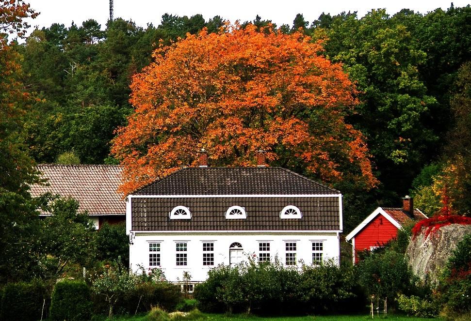 Høstbilde Høvåg