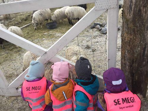3 små barn som ser på sauer