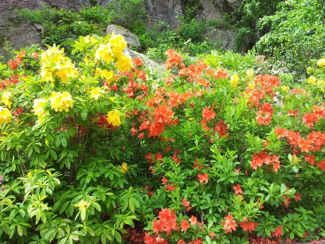 Blomster Foto:
