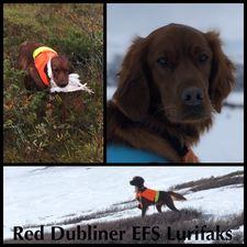 Red Dubliner EFS Lurifaks