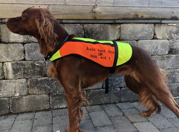 US PUNKY_årets hund 2019_UK