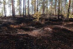 Brannen ved Grønmo dekket et område på ca. 100 ganger 100 meter. Foto: Tor Ødemark.