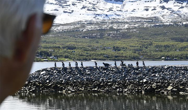 Pingvin_BIG2.jpg