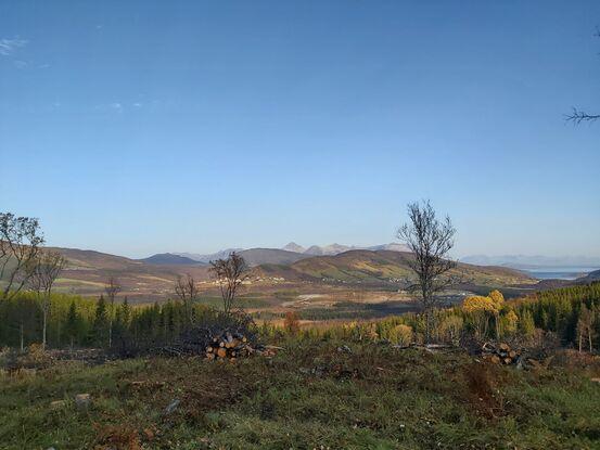 Slik blir det når skogen er ryddet. Foto: Gyrd Harstad