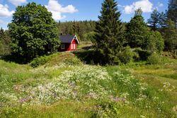"""En """"gammeldags"""" blomstereng er et vakkert syn. Her er vi ved Øvresaga, Turistforeningens ubetjente hytte i Rausjøgrenda. Foto: Espen Bratlie."""