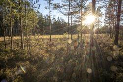 Lav sol over Langmyrene: Myra er en verdifull naturtype med stor estetisk verdi som vi håper blir vernet. Foto: Bjørnar Thøgersen.