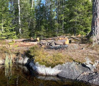 1 Leirplass nedhogde trær