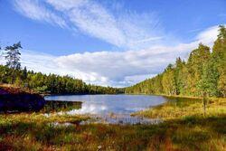 På myra i sørvestenden av Eriksvann er funnet takrør, blåtopp, elvesnelle, flekkmarihand, pors, myrhatt og bukkeblad, viser NINAs rapport. Foto: Anders Rinvold.