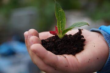 Plantespire i jordhaug - i barnehånd