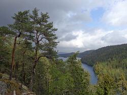 Ljanselv-vassdraget begynner her inne ved Lutvann, ganske langt nord i Østmarka, og munner til sist ut i Bunnefjorden ved Fiskevollbukta. Foto: Bjarne Røsjø.