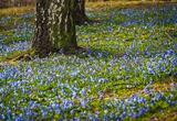 bluebell-3248080_960_720