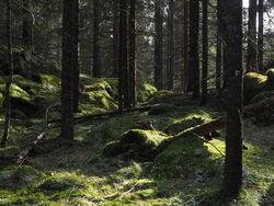 Kartleggingen av naturtyper viser blant annet at skogområdene mellom Børtervann og Ytre Enebakk er lite kartlagt. Bildet er fra Kristenseteråsen.