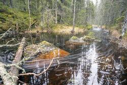 Eriksvannbekken byr på spennende opplevelser året rundt. Foto: Bjørnar Thøgersen.