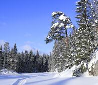 Naturreservat 1 Tretjernhøla BLD