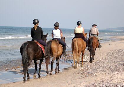 Ferdsel utmark hest
