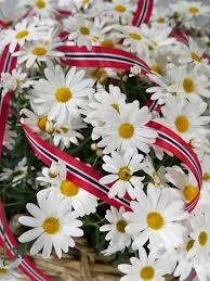 mai blomster