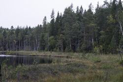 Overraskelsen ved Rottjern: Den lille tangen til venstre for midten av bildet inneholdt mange rikmyrarter, blant annet gullmose. Foto: Dag Hovind.