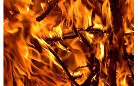 brann-8079