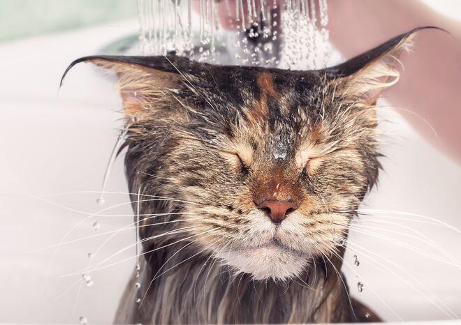 Kattk bader