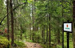 Bildet viser området der stien gjennom området som nå planlegges for hogst møter det vernede friluftslivsområdet rundt Hauktjern. Foto: Helga Gunnarsdóttir.