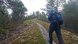 Stien over Kristenseteråsen er en perle i Østmarka, og lokalkjente hevder at dette er Heidi Wengs hemmelige treningstur. Foto: Knut Bryn.