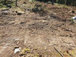 Flere steder er det skader på vegetasjonsdekket og mineraljorda er blottlagt.