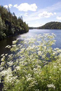 Naturmangfoldet i Østmarka har stor verdi, fordi naturverdiene berører mange og nasjonalparken vil gjelde naturtyper som i liten grad er vernet fra før i Norge. Foto: Espen Bratlie.