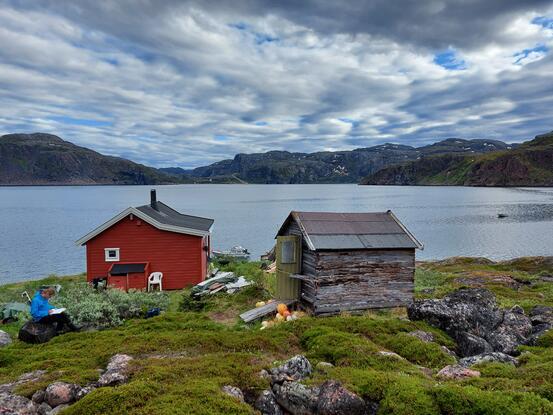 Musthytta i Kobbholmfjorden