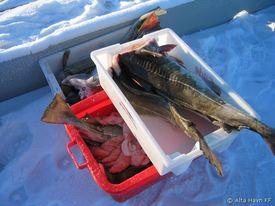 2009-02_møljekalas-på-kaia-1